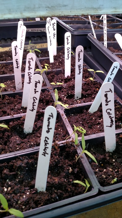 seedlings labeled